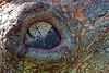 The bark eye (Deb Jones1) Tags: trees brown macro nature beauty canon garden botanical outdoors flora textures bark flickrduel flickrawards debjones1