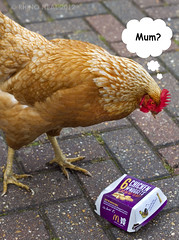 [mum?] (RHiNO NEAL) Tags: chicken funny comedy comic joke mirth rhino laughter hen nuggets caption comical neal thoughtbubble hysterical mcnuggets sickhumor sickhumour rhinoneal gettyimagesartistpicks rhinoneil