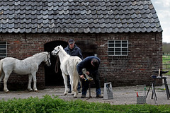 Farrier doing his work near Amersfoort, The Netherlands (Simon Christiaanse) Tags: people horse barn europe nederland thenetherlands craft stable amersfoort farrier hoogland shoesmith coelhorst simonchristiaanse
