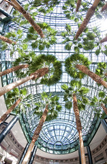 The roof of the Winter Garden at the World Financial Center (Jay Fine) Tags: nyc newyork lookingup palmtrees wintergarden batteryparkcity worldfinancialcenter nikonfisheye fisheyenorthcove1wtcwintergarden