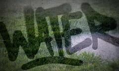 water, grass, puddle (oana-emilia) Tags: city wet water grass puddle budapest 2012 notfun week24 16km withinamile 522012 52weeksthe2012edition myshoesgotwetbecauseofthis weekofjune10