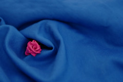 The hype (neelgolapi) Tags: pink blue flower rose canon lace fabric synthetic xti 2470mmf28l