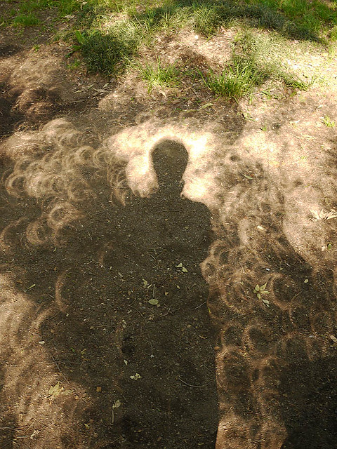 Shadows of an annular solar eclipse