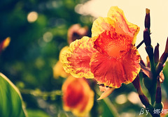 Flower ( Nana) Tags: flowers plant flower love nature beautiful nikon colorful bokeh taiwan lovely  i bokehlicious  d7000