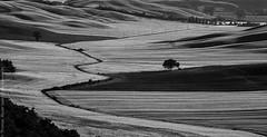 Crete Toscana (Thomas Wyser) Tags: italien italy italia tuscany crete toscana toskana canoneos7d