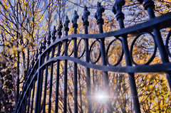 The gate (Explored 27 May 2012) (Indigo Skies Photography) Tags: morning autumn light sun colour leaves photography gate flickr australia victoria autumnleaves colourful sunflare echuca nikond2h raychristy wharparilla