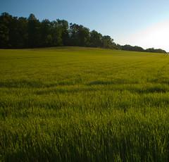 Feld in der Abendsonne (MasikatiElke) Tags: frhling ammertal