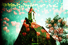 Floral Chapel (Hodaka Yamamoto) Tags: park flower church garden spring xpro lomography crossprocessed xprocess doubleexposure crossprocess chapel double lomolca multipleexposure crossprocessing tulip doubles