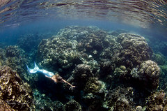 in the crevice (wendymd) Tags: fisheye tokina mermaid palau rockisland 1017mm nikond7000
