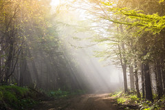 Lighting the Path (Jim Boud) Tags: travel light sun sunlight mountain fog forest russia hiking path sony hill hike trail dirtroad rays beams sakhalin skirun nex mirrorless jimboud sakhalinoblast южносахалинск jamesboud yuzhnosakalinsk nex7 sonynex7 yuhzno