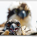 MD Osprey Chick 2012