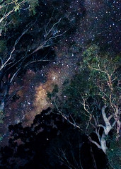 Milky Way through the Eucalypt Trees (Explored 8 June 2012) (Indigo Skies Photography) Tags: trees sky colour night stars photography flickr nighttime eucalypt colourful milkyway southernhemisphere southernsky nikond90 raychristy