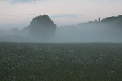 (frettir) Tags: mist tree grass fog evening sweden stockholm meadow trd dimma grs bromma ng kvll ngby hundkx