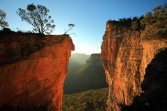Into the Abyss (Darren Schiller) Tags: mountains tree nature rock nationalpark bush australia bluemountains cliffs newsouthwales gorge brilliant hangingrock