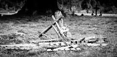 Grave, Waratah Tasmania (paulledger81) Tags: grave tasmania waratah australia tarkine death cemetery burialground d3300 manualfocusnikon