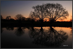 Burnished Sky. (Picture post.) Tags: trees green nature water sunrise reflections landscape interestingness eau silhouettes willow paysage arbre