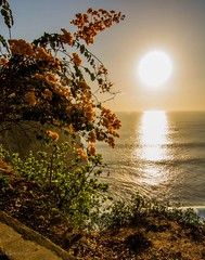 Uluwatu Temple Sunset Flower (eking86) Tags: ocean travel flower color beach beautiful indonesia temple golden view adventure explore uluwatu lovely goldenhour uluwatutemple