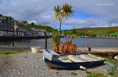(Zak355) Tags: scotland pier scottish quay palmtrees bute rothesay isleofbute portbannatyne