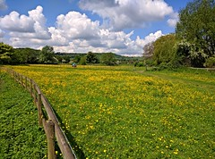 Goring field (Rob IH) Tags: blue sky yellow countryside hills clouds buttercups green summer trees goring england thames sunshine fence farm horses railway