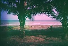 Last days of summer (Stitch) Tags: trees film beach 35mm lomo lca lomography fuji coconut philippines expired seashore provia quezon asa100 infanta deadstock lomomanila