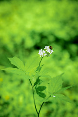 Flower (kissmuch) Tags: flower macro green nature insect wildflower xt1 xf60mm