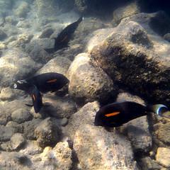 Kailua Pier Diving - VI (Anders Magnusson) Tags: water hawaii snorkel diving olympus thebigisland eastcoast kailua kailuakona andersmagnusson