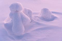 Riisitunturi 15409 by Jari Peltomki (www.finnature.com) Tags: winter suomi finland landscape january lapland talvi lappi tammikuu posio riisitunturi lnsisuomi satakunta tykky satakunda westernfinland lapinlni lapplandsln vstrafinland lapinmaakunta laplandprovince itlappi crownsnow raumanseutu easternlapland laplandregion lapplandslandskap raumasubregion raumoregionen tykkymets stralappland