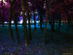 Psychedelic Forest (Tricia H C) Tags: trees nature forest psychedelic