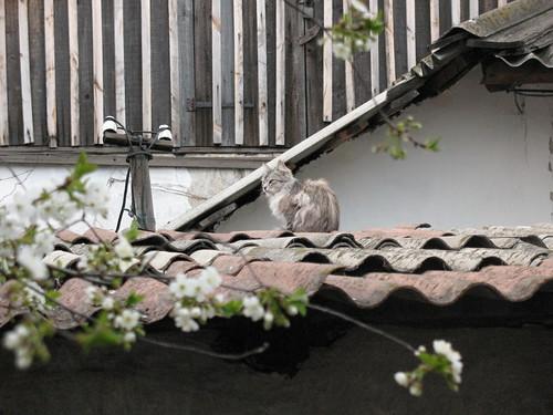 Cat on the roof ©  Alexxx1979