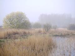 Early morning mist (yvonnepay615) Tags: uk mist nature lumix suffolk panasonic g1 45mm eastanglia rspb wow1 wow2 wow3 lakenheathfen