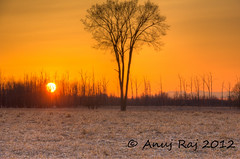 Golden Glow (powershotpix) Tags: sunset sun ontario canada tree bird forest golden ottawa trails hour flickraward mygearandme mygearandmepremium mygearandmebronze flickrstruereflection1 flickrstruereflection2 flickrstruereflection3 flickrstruereflection4 flickrstruereflection5 flickrstruereflection6