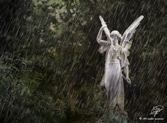 Show me the way (Moments by Xag) Tags: sky sculpture cemetery rain statue angel lluvia pain cementerio escultura textures funeral cielo estatua texturas dolor funebre xag 20tf 20tflluvia