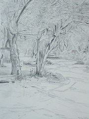 North Leigh Common (Martin Beek) Tags: tree art pencil observation landscape spring artwork artist drawing line study oxfordshire markmaking britishlandscape martinbeek landscapedrawing britishlandscapes landscapedrawings martinbeekartwork artwork201013