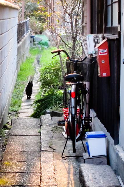 Today's Cat@2012-03-26