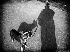 Herr + Hund 27.03.2012