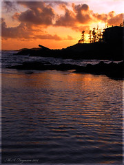 Goodnight Ucluelet (MattFergusonPhotography) Tags: ocean trip trees vacation canada beach nature water canon evening rocks waves bc getaway britishcolumbia ps vancouverisland pacificocean pointandshoot westcoast ucluelet