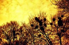 Rot ist das neue S/W! 95/366 (Skley) Tags: berlin rot film backlight contrast analog canon photography eos photo lomography foto fotografie creative picture commons cc creativecommons bild kontrast licence gegenlicht 500n kreativ filmisnotdead redscale lizenz sooc 95366 skley redscalexr50200 dennisskley