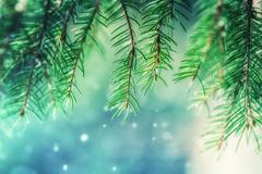 Mystical Forest (Aspiriini) Tags: snowflake snow bokeh fir kuusi jonilehto aspiriini
