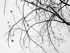 Various Branches (shaire productions) Tags: trees blackandwhite bw tree nature silhouette photo blackwhite branch natural image outdoor branches monotone photograph trunk shape imagery
