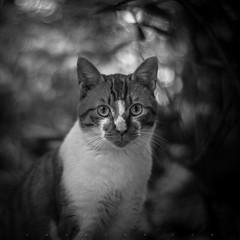 (SONG TSE) Tags: street cat shanghai pentax    k10d