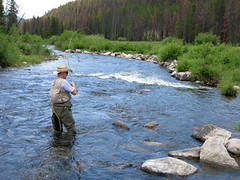 "Fly fishing in Greer, AZ -- Little Colorado River • <a style=""font-size:0.8em;"" href=""http://www.flickr.com/photos/77555780@N03/7110596095/"" target=""_blank"">View on Flickr</a>"