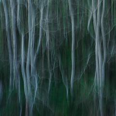 Der Tanz der Waldfeen (flowerpics09) Tags: green colors spring graphic dream grau struktur structure silence april grn farben frhling mecklenburg wischer d700
