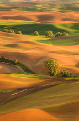 Layer Cake (~ Aaron Reed ~) Tags: light green photography spring waves photographyclass photographers velvet hills workshop stockphotos stockimages palouse professionalphotography blackwhitephotography easternwashington palousehills photographyschool fineartphotographs skyphotographs lakephotographs aaronreed naturephotographs abstractphotographs landscapephotographs photographytraining framedartprints sunsetphotographs artphotographs sunrisephotographs aaronreedphotography surrealphotographs redphotographs waterphotographs cityscapephotographs cloudsphotographs duskphotographs reflectionphotographs exposurenorthwest bluephotographs aaronreedphotographer landscapephotographygallery mountainsphotographs orangephotographs pavementphotographs whatislandscapephotography whatisstockphotography aaronreedart aaronreedprints aaronreednature aaronreedaluminumartprints yellowphotographs bridgephotographs buildingsphotographs twilightphotographs roadphotographs aaronreedmetalprints aaronreedacrylicfacemountprints