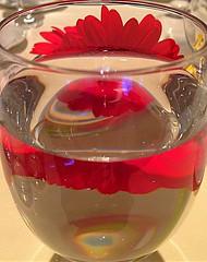 iTs a Frill (green-dinosaur) Tags: flowers light red abstract flower reflection art water glass closeup petals kent colours close reflect 365 app iphone flowerscloseup iphone4 suefagg