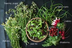 market report 06.09.12 (Megan | When Harry Met Salad) Tags: summer radishes farmersmarket strawberries chamomile freshproduce garlicscapes saladmix floweringarugula