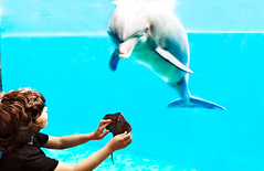 Acquario di Genova - Playing with the Dolphin and fake Stingray. (castgen) Tags: blue portrait italy baby