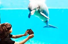 Acquario di Genova - Playing with the Dolphin and fake Stingray. (castgen) Tags: blue portrait italy baby fish animal azul mammal gris aquarium blauw italia stingray dolphin retrato peces liguria gray grau portrt bleu beb genova peixe beb animales blau animaux portret azzurro vis dauphin ritratto cinza dier acquario manta bb animale acuario dolfijn tier  aqurio poissons grijs pesce delfino celeste mammifre delfines bambino fische delphin golfinho mamfero akwarium   sugetier   zoogdier mammifero    grigg