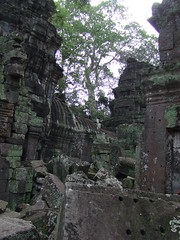 The crumbling ruins (oldandsolo) Tags: cambodia buddhism worldheritagesite siemreap taprohm tombraider buddhisttemple angkorarchaeologicalpark khmerkingdom theruinsofangkor buddhistfaith crumblingruins angkortempleruins