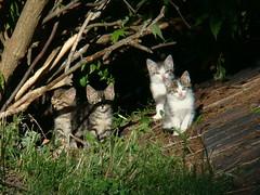 Junge Kätzchen am Lärchhof