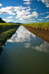Shana (AllisonCornford) Tags: tweed pottsville murwillumbah fingal kingscliff northernnsw northernrivers tumbulgum